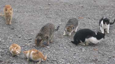 herd cats